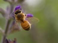 Qué hacer si una abeja pica a un niño alérgico